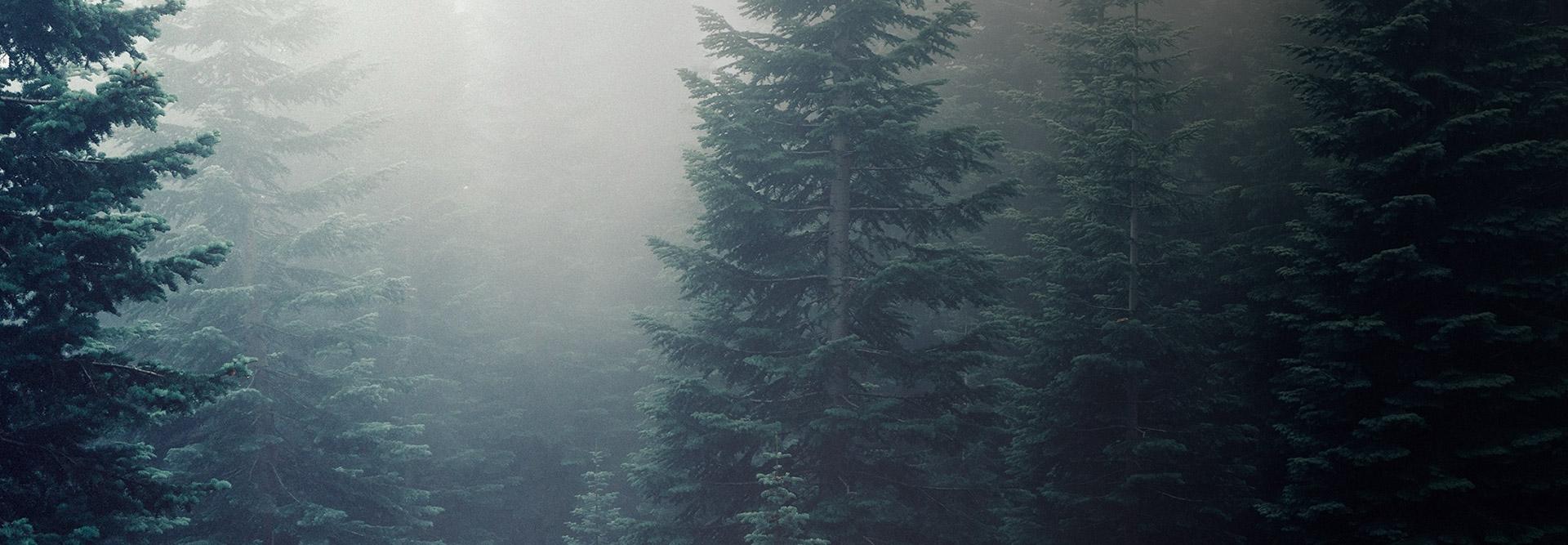 Bois issus de forêts durablement gérées